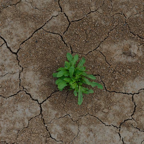 evolveGrow Resilience